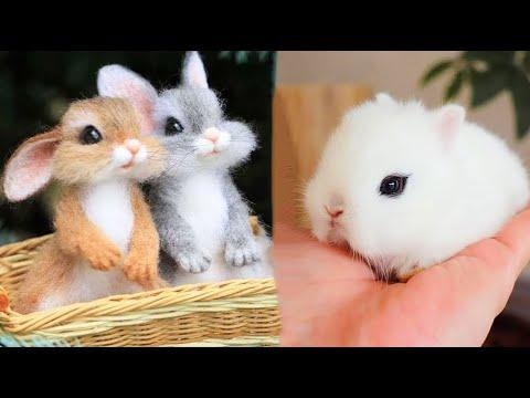 Cutest baby animals Videos Compilation Cute moment of the Animals - Cutest Animals #47
