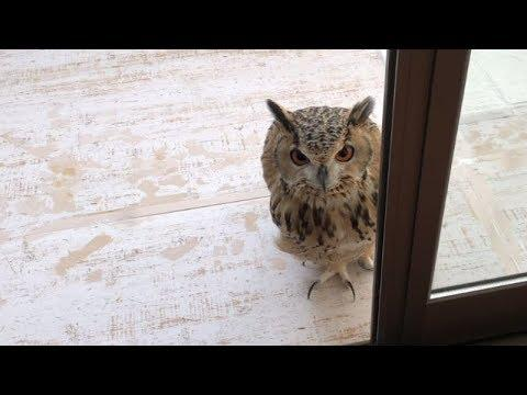The house where an owl waits for you video