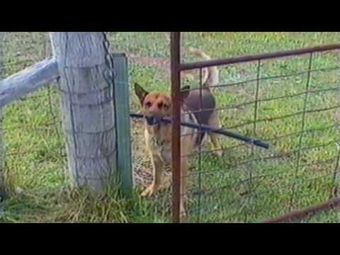 Dogs Going Through Doors With Sticks That Are Too Big