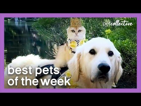 The King Has Returned Video | Best Pets of the Week