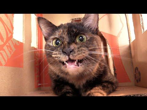 My Cat's Mumbling, Chattering, Evil Laugh! #Video