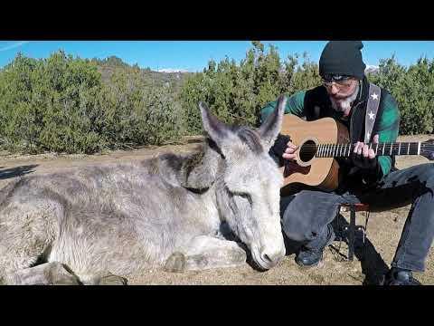Hazel the Donkey loving her classic rock songs #Video