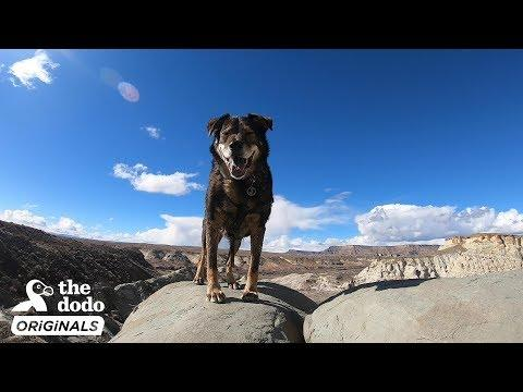 Rescue Dog And His Dad Take The Road Trip Of Their Lives l The Dodo Destination: Firsts