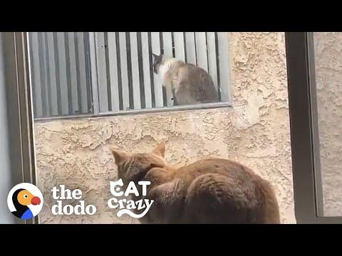 These Cat Neighbors Fall In Love Through Their Windows Video