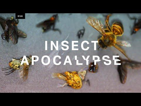 "Is the ""insect apocalypse"" real?"