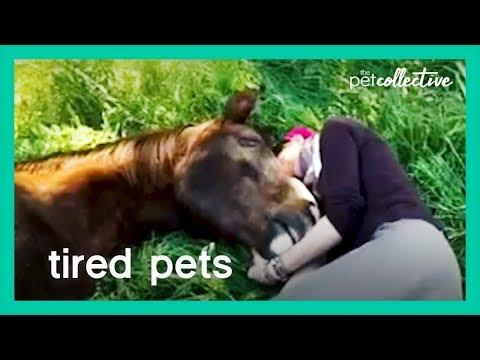 Tired Pets | The Pet Collective