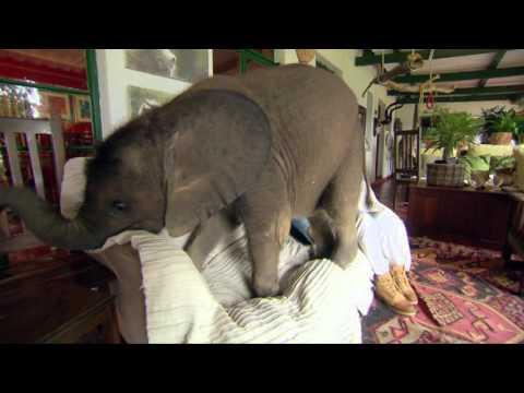 Moyo The Baby Elephant Causes Havoc At Home