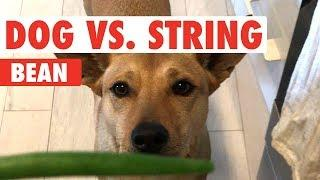 Dog vs. String Bean   Clip of the Week