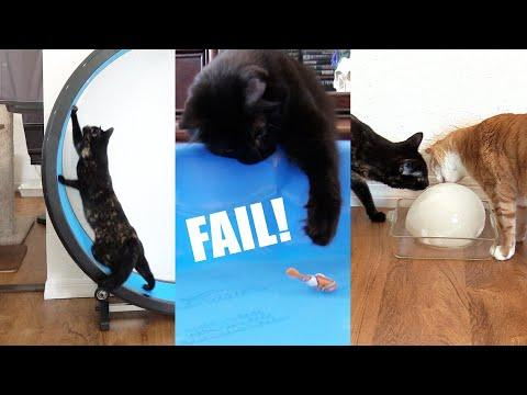 When Cat Videos Go Wrong! - Cats vs Fish, Ice Ball & Treadmill