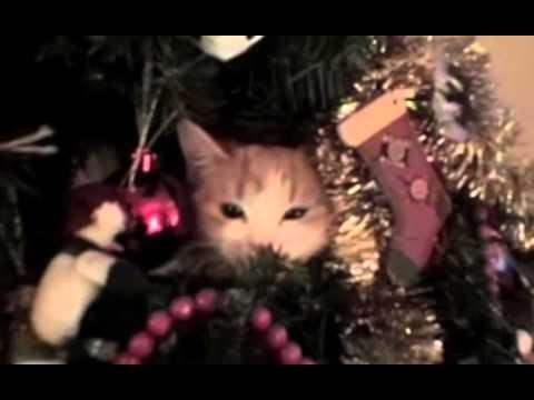 Cats Stuck In Christmas Trees