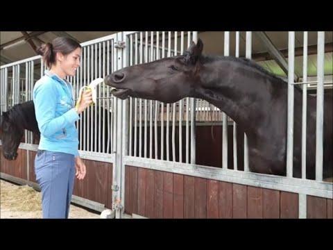 Do Friesian horses like bananas?