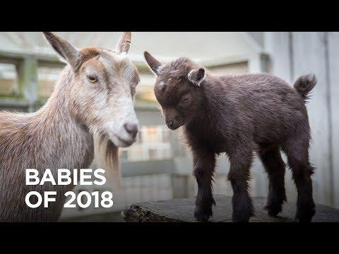 Babiest Moments of 2018