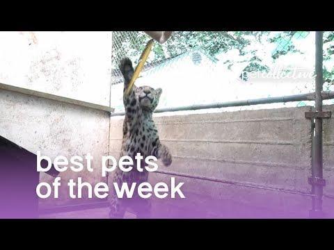 Best Pets of the Week (September 2019) Week 2