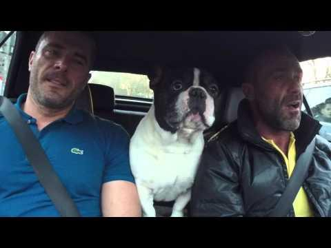Junior The French Bulldog - Because Of You