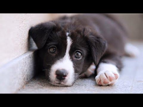 Little Stray Puppy Finds A Loving Family #Video