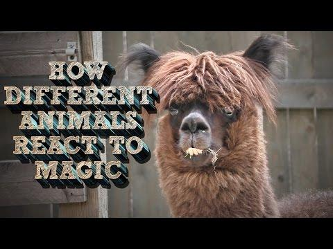 How Different Animals React To Magic