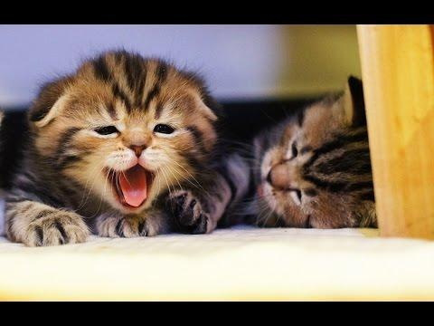 Funny Cats And Cute Kittens | New HD Compilation
