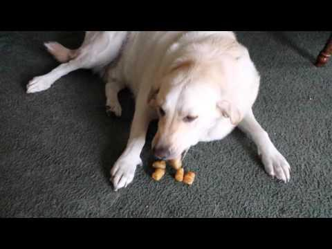 Guess How Many Tater Tots This Dog Hides In His Mouth