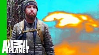 Forrest Spots a Sprinting Wolf With A Thermal Drone! | Extinct or Alive