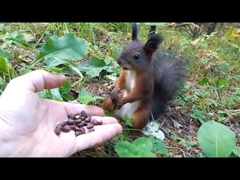 Squirrel Frozen In Time Video. Your Daily Dose Of Internet.