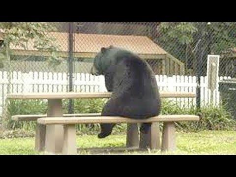 ANIMALS that will MAKE YOU LAUGH EXTREMELY HARD #Video