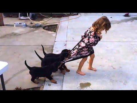 DOGS from PUPPIES TO GROWN UPS Video