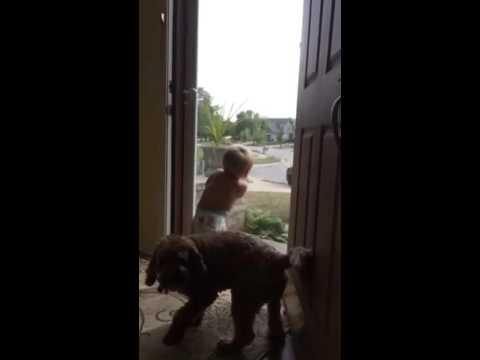 Toddler And Dog - Daddy's Home!