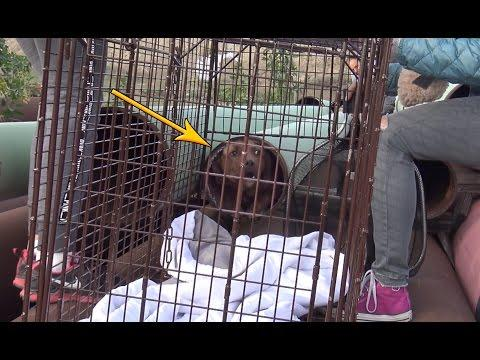 Scared Homeless Dog Hides In Oil Pipe Until Hope For Paws Was Called