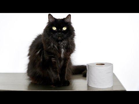 The Toilet Paper Challenge