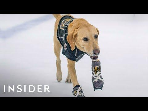How This Rescue Dog Learned To Ice-Skate