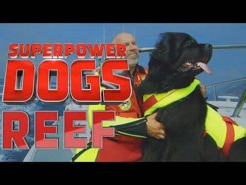 Filming Reef, the fearless Italian water rescue dog | Superpower Dogs
