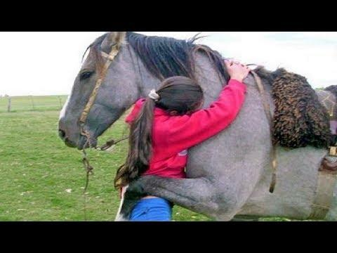 Animals Hugging Humans – Animal Hugs People Videos – Animal Hug Human Video – Animals Show Love