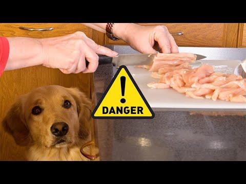 10 human food that can be fatal to dogs
