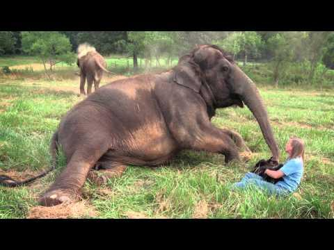 Carol Buckley: Making A Difference For Elephants