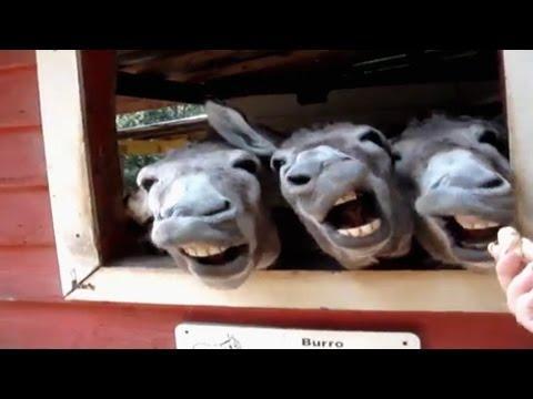 Donkeys Make Funny Faces