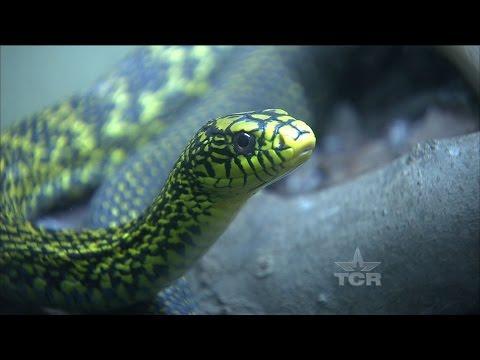 Venomous Snake Handler (Texas Country Reporter)