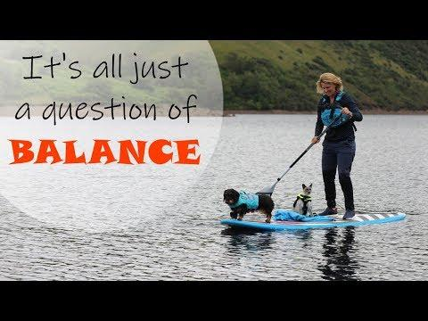 Balance - 2 Donkeys 2 Ponies 1 Cat 1 Dog & a SUP board! Emma Massingale