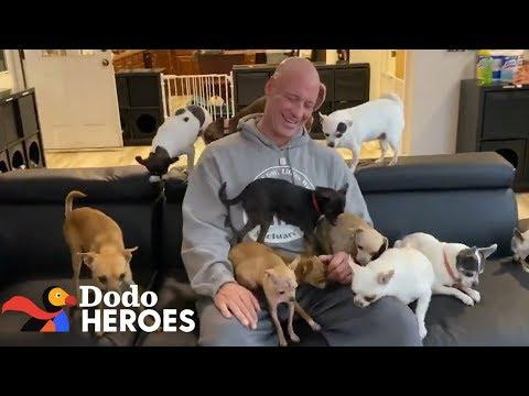 This Guy's Addicted to Rescuing Chihuahuas | Dodo Heroes