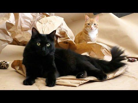 Cole And Marmalade | Cat Birthday Surprise