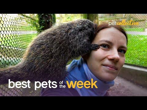 Caring Critters | Best Pets of the Week Video