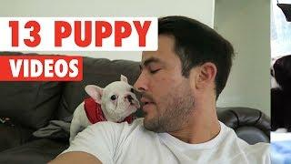 13 Funny Puppies   Funny Dog Video Compilation 2017