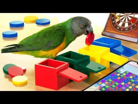 Funny Parrot Tricks – Funny Bird Videos – Cute Parrots & Birds Video   Funny Birds Doing Tricks