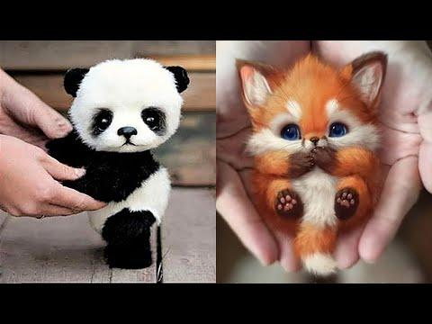 10 Cutest Baby Animals That Will Make You Go Aww Video