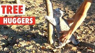 Tree Huggers | Funny Pet Compilation 2018
