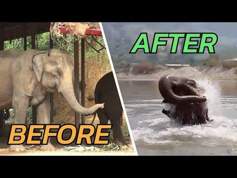 The Transformation of Elephant Noi Nah