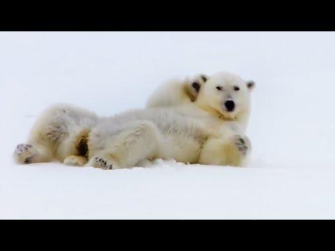 Top 5 Silliest Animal Moments! | BBC Earth