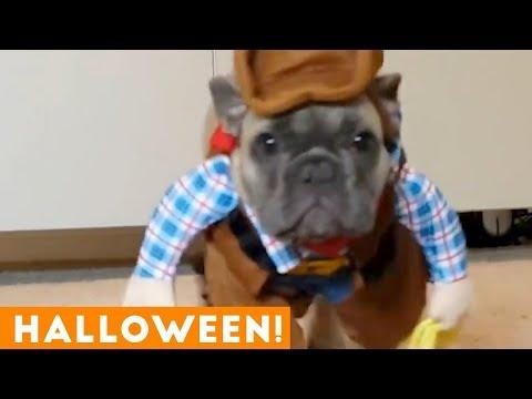 Funniest Halloween Pets Compilation of 2018 | Funny Pet Videos