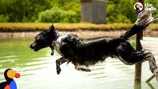Dog Sprints and Jumps Into Water Every Chance He Gets   The Dodo