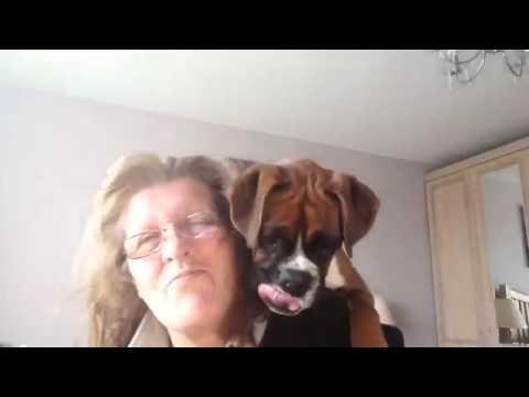 Boxer Puppy Saves Woman From Hair Dryer