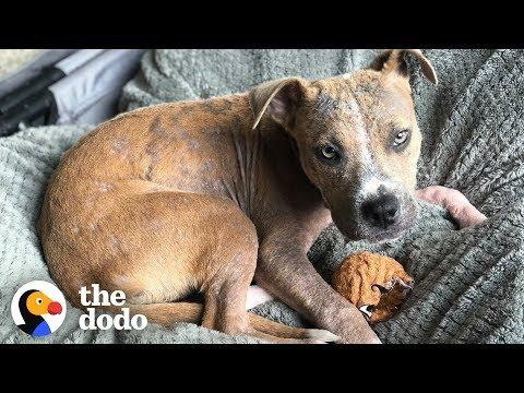 Stray Puppy Found Covered in Ticks Completely Transforms | The Dodo
